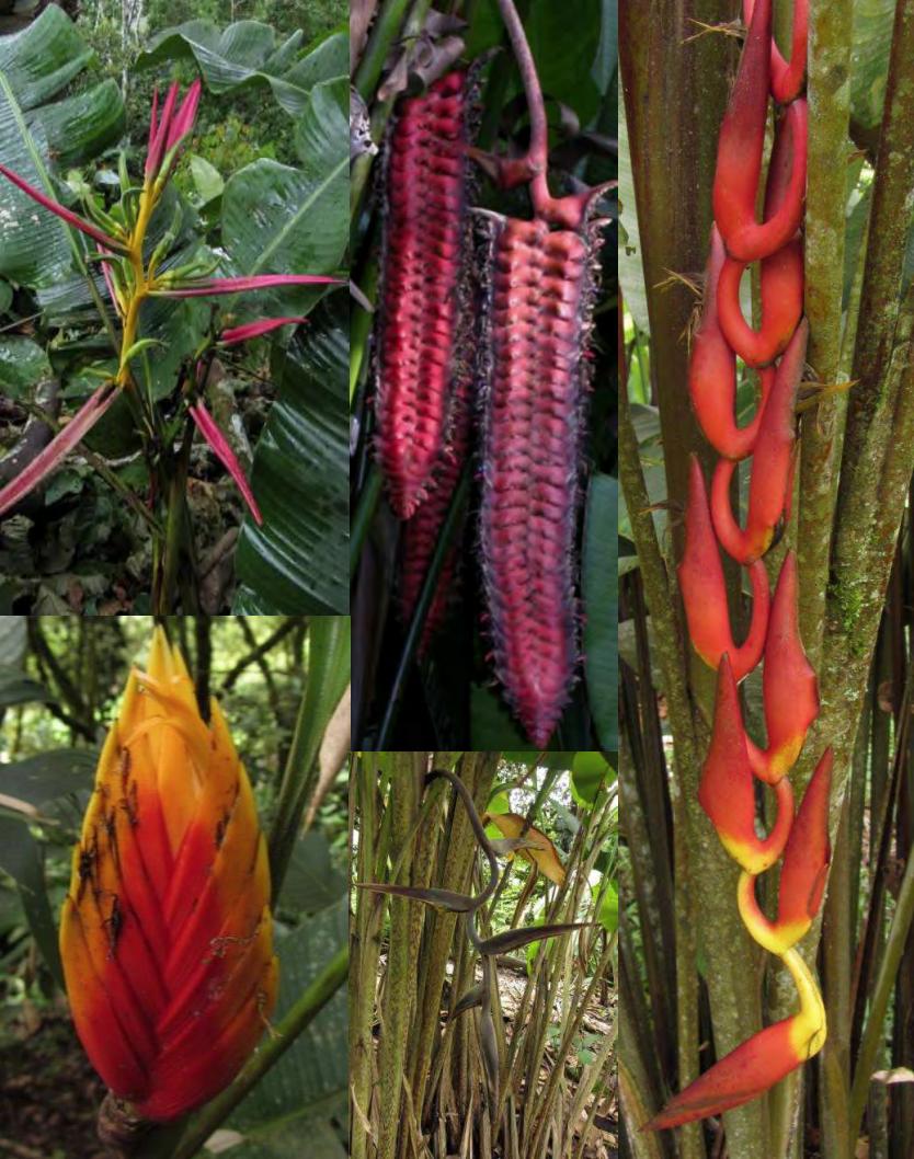 Michael Benedito – Panama & Costa Rica (2012)